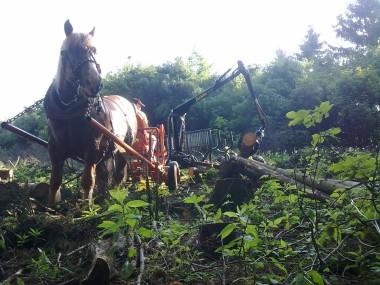 Vyvážečka s koněm
